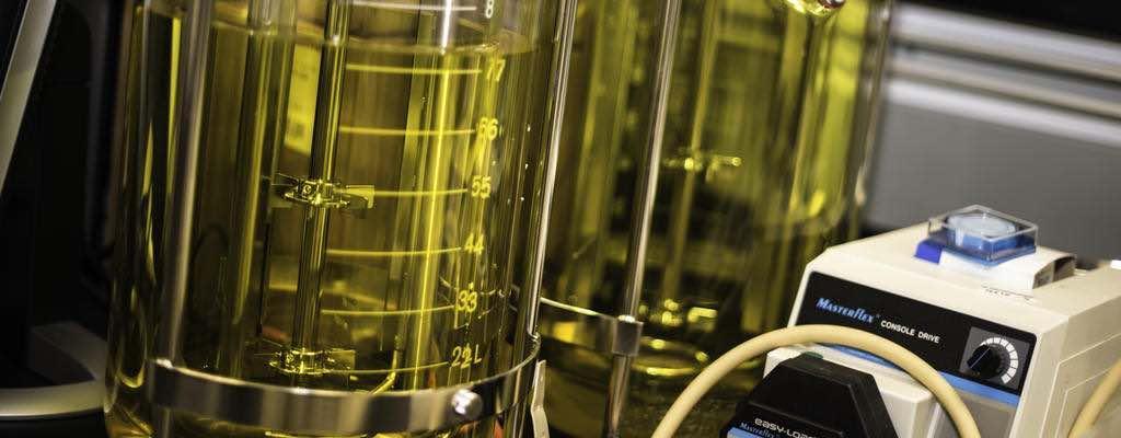Biotechnology fermentor